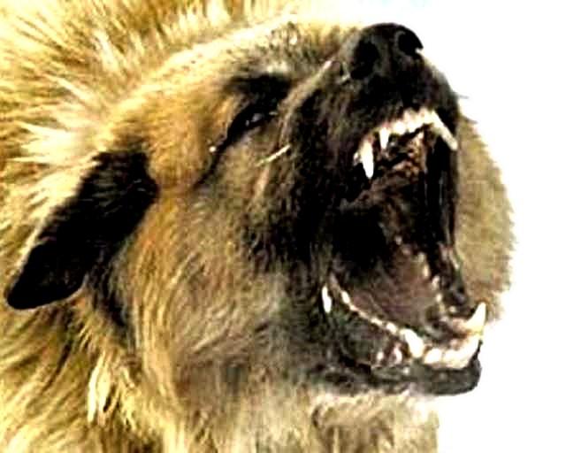К административной ответственности привлечен владелец собаки, которая покусала детей